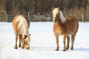 Mit Pferde Reitausflüge genießen