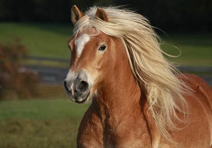 Reiterurlaub auf Föhr: 850 Pferdestärken